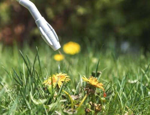 Roundup weed killer links to lymphoma and what it means to you